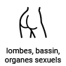 lombes, bassin, organes sexuels